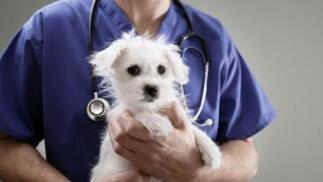Campaña de prevención de la LEISHMANIOSIS para tu mascota