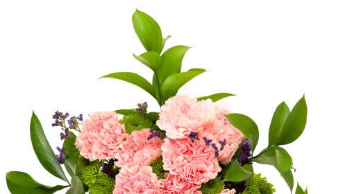 ¡Flores a domicilio! Ramos de rosas, tallos de flor o alstroemerias
