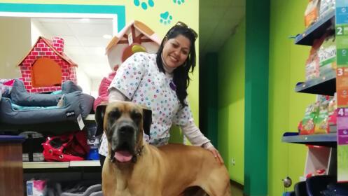 Corte, baño y tratamiento antiparásito para tu mascota.